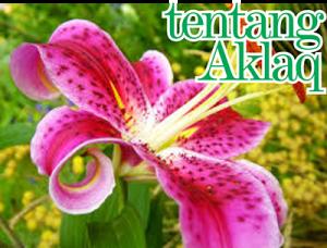 aklaq_40