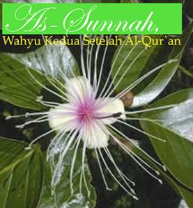 sunah_40